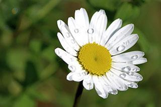 Les propriétés magiques des plantes