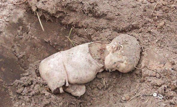 Bébé albinos trouvé mort en Tanzanie