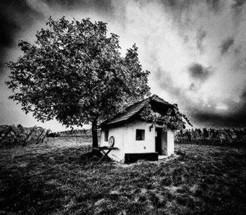 Cabane près des vignes