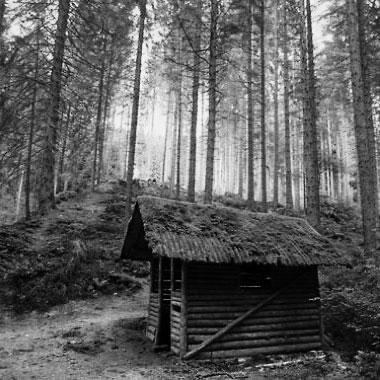 Cabane abandonnée dans les bois