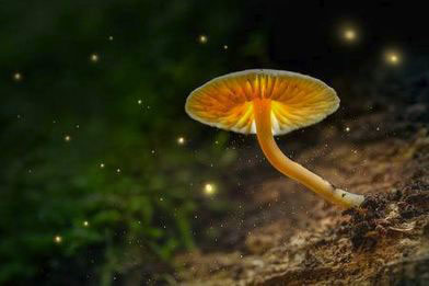 champignon magique