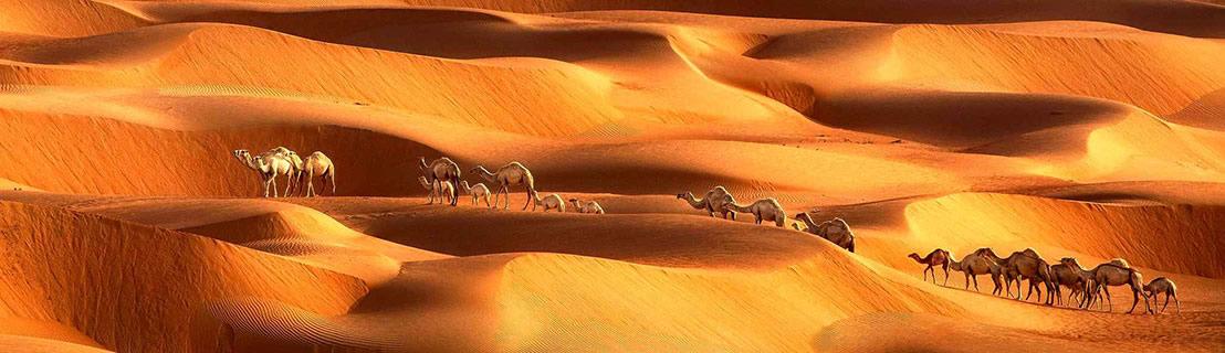 Convoi de nomades dans le désert
