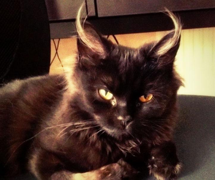 Un djinn métamorphosé en chat