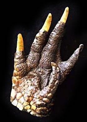 Talisman Hoodoo en griffes d'alligator