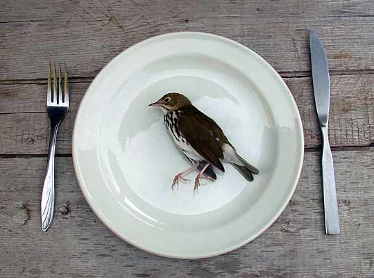 Illustration 2 : Oiseau mort et sorcellerie