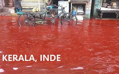 Pluie de sang
