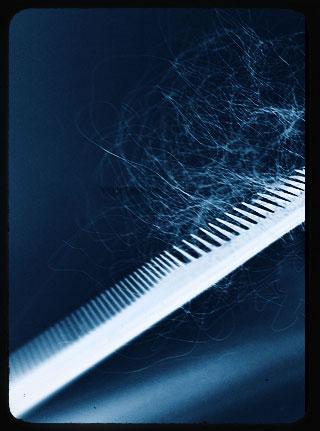 Cheveux sur un peigne