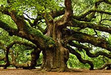 Les arbres sacrés