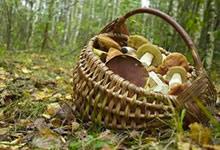 Les champignons magiques