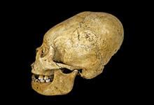 Le mystère des crânes allongés