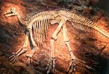 Les extinctions contrôlées