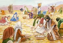 Le distributeur de manne des Hébreux