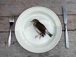 Oiseau mort et sorcellerie