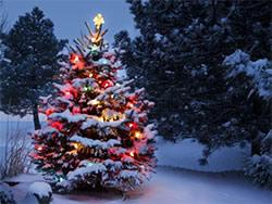 Le sapin de Noël est un rite païen
